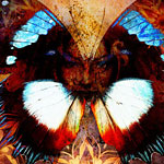 woman-butterfly-pic